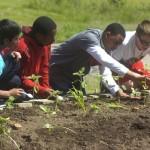 Aftercare garden program